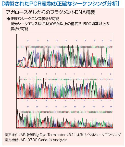 精製されたPCR産物の正確なシーケンシング分析の図